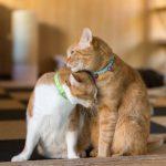 友達を励ますように寄り添う猫の姿。情報にもバリアフリーを。障がい者とその関係者のコミュニティ、情報サイト。ナレバリ