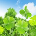 真っ青な良い天気の青空と、緑豊かな自然の中に、クローバーが青々と茂っている、気分が爽快になる気持ちの良い自然の様子。情報にもバリアフリーを。障がい者とその関係者のコミュニティ、情報サイト。ナレバリ