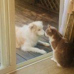 違う動物ではありながら仲良くコミュニケーションをとって支えあっている中の良い犬と猫のイメージ画像。情報にもバリアフリーを。障がい者とその関係者のコミュニティ、情報サイト。ナレバリ